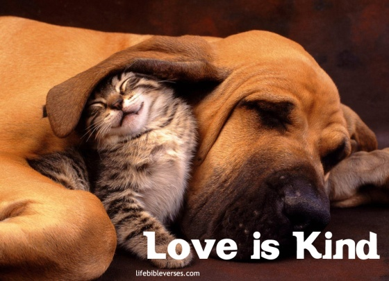 bible-verse-love-is-kind1